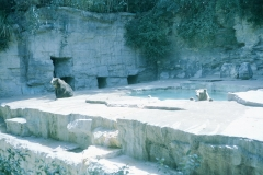 San Antonio Zoo, 1974